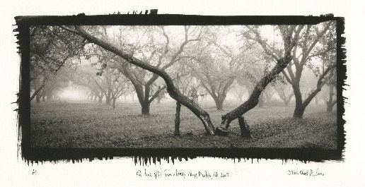 "©Chris McCaw ""Old Tree Split from a Heavy Crop, Manteca, CA, 2002"""